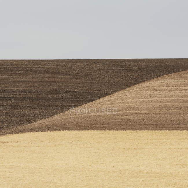 Wheat field in Washington — Stock Photo