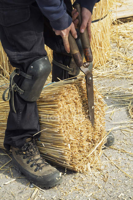 Thatcher cutting yelm of straw — Stock Photo