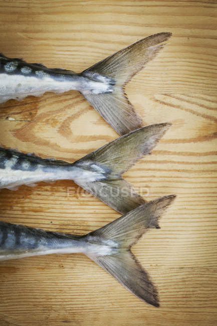 Fresh Mackerel on a chopping board — Stock Photo