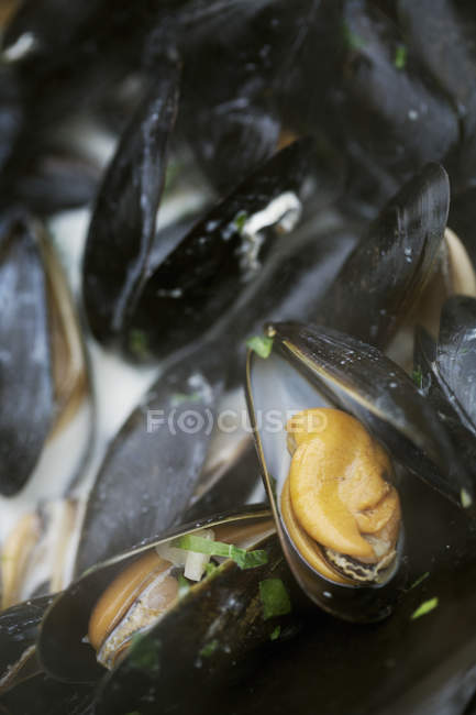 Pan of steamed Black Mussels. — Stock Photo