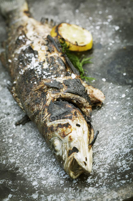 Grilled fish with lemon and herbs. — Stock Photo