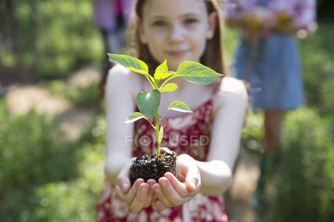 Девушка держит завод с зеленой листвы — стоковое фото