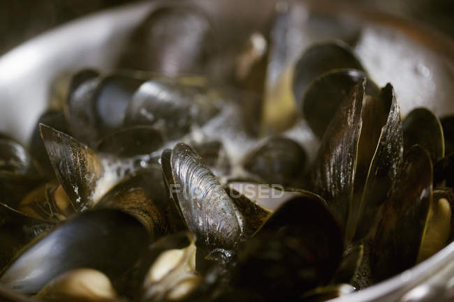 Steamed Black Mussels. — Stock Photo