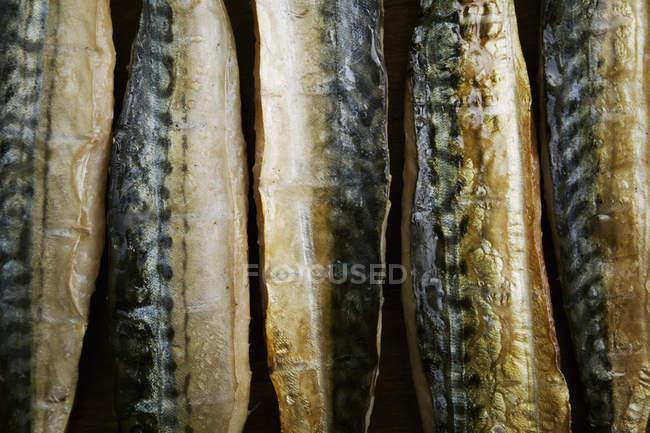 Filetes de pescado ahumado - foto de stock