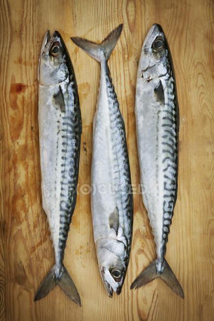 Fresh mackerel on chopping board. — Stock Photo