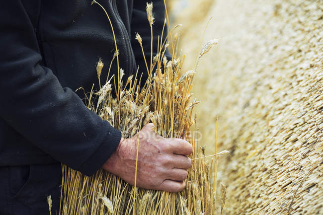 Thatcher holding yelm of straw. — Stock Photo