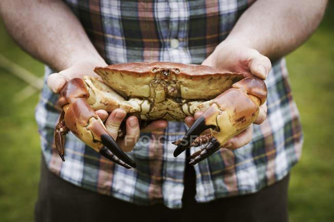 Chef che tiene un granchio fresco — Foto stock