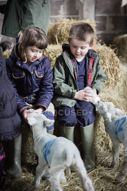 Children and newborn lambs — Stock Photo