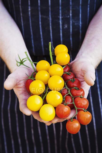 Chef  holding fresh produce — Stock Photo