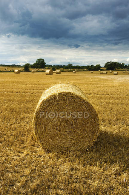 Bales of straw in field — Stock Photo
