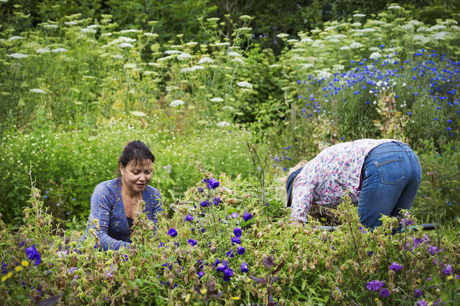 Women working in flowerbed — Stock Photo