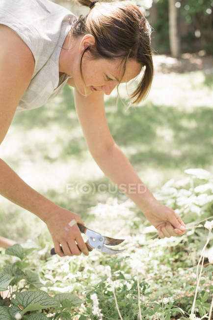 Woman cutting white flowers — Stock Photo