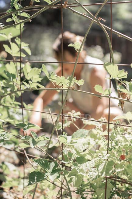 Frau kniend im Garten — Stockfoto