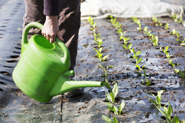 Person watering seedlings. — Stock Photo