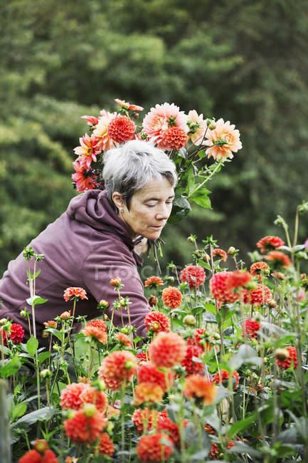 Woman cutting flowers — Stock Photo