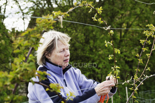 Woman tying in shoots — Stock Photo