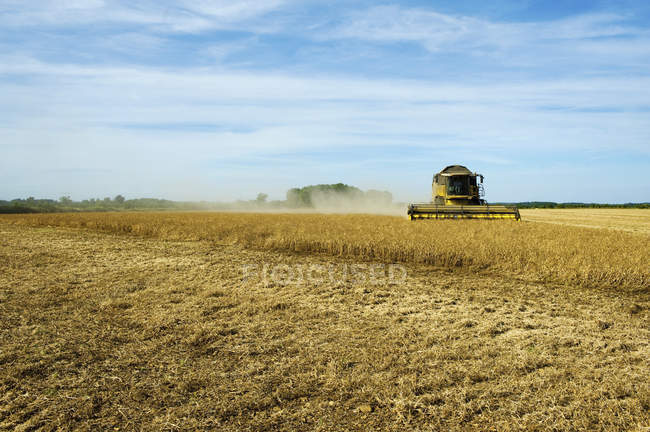 Combine harvester in field — Stock Photo