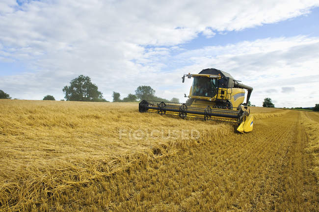 Combine harvester in a field — Stock Photo