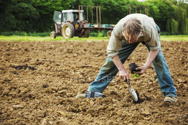 Mann pflanzt kleine Setzlinge in die Erde — Stockfoto