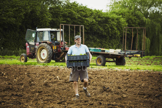 Mann trägt Tablett mit Setzlingen — Stockfoto