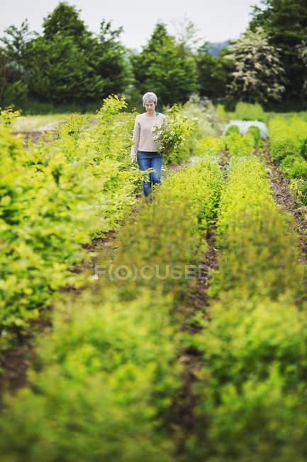 Weibliche Floristen, die Auswahl der Blumen im Garten — Stockfoto