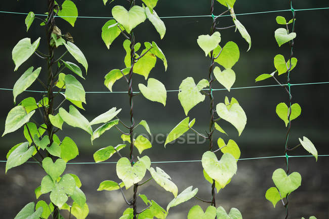 Plants growing on wires — Stock Photo