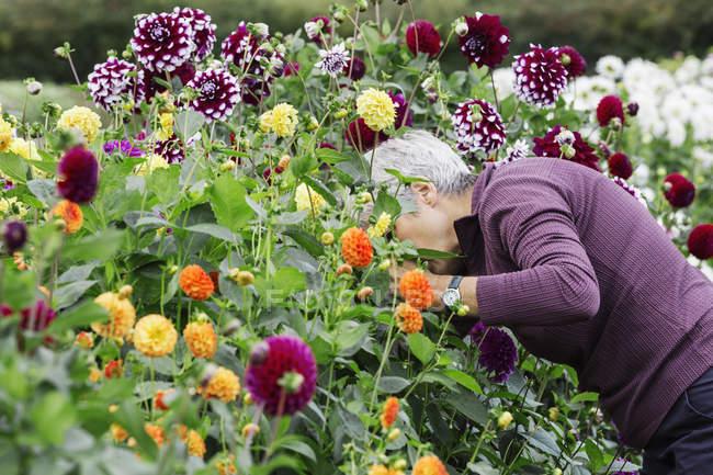 Woman working in organic flower nursery — Stock Photo