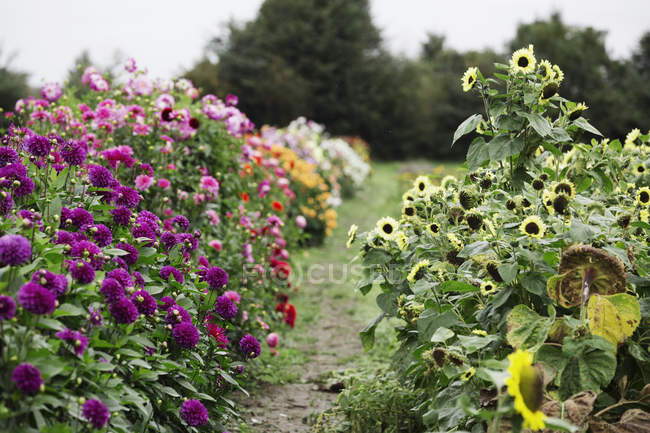 Commercial plant nursery — Stock Photo