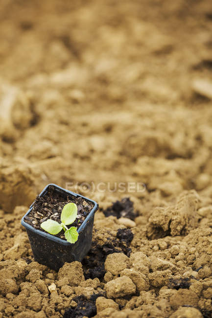 Seedling in plant pot — Stock Photo