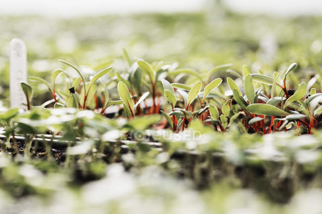 Micro leaves and seedlings growing — Stock Photo
