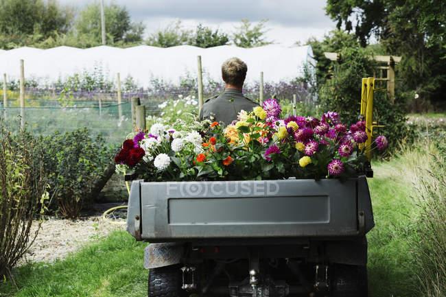 Man driving a small garden vehicle — Stock Photo