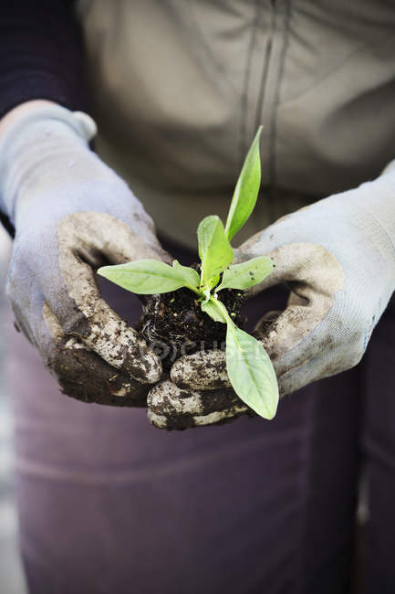 Person planting small plant — Stock Photo