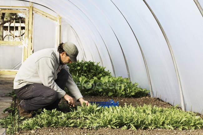 Gärtner, die tendenziell Zeilen von Sämlingen — Stockfoto