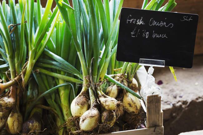 Organic onions in wooden box — Stock Photo