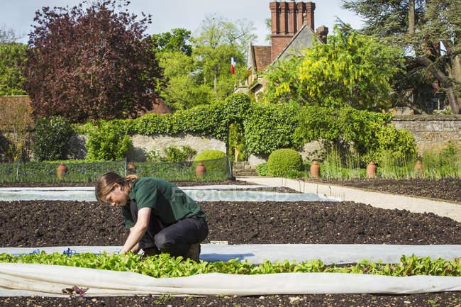 Женщина, работающая в обнесенный стеной сад — стоковое фото