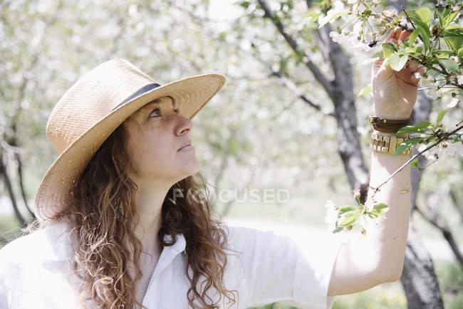 Жінка під яблунею вишні. — стокове фото