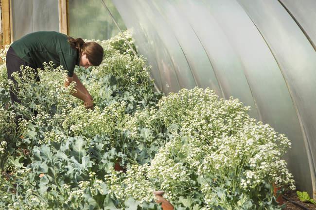 Женщина, работающая в большой огород — стоковое фото