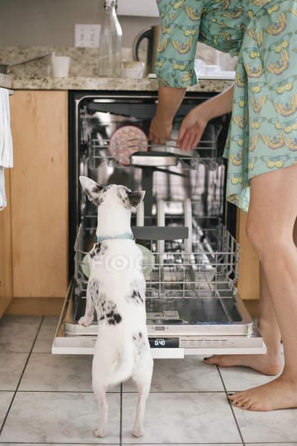 Босоніж жінка і білу собачку — стокове фото
