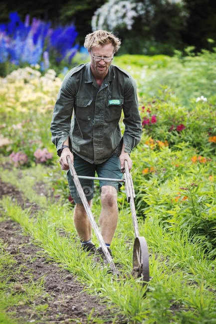 Man using wheel hoe in garden — Stock Photo