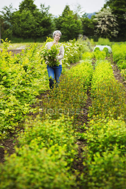 Female florist selecting flowers in garden — Stock Photo