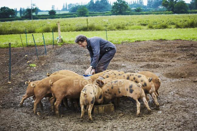 Mulher enchendo o cocho de alimentação para suínos — Fotografia de Stock