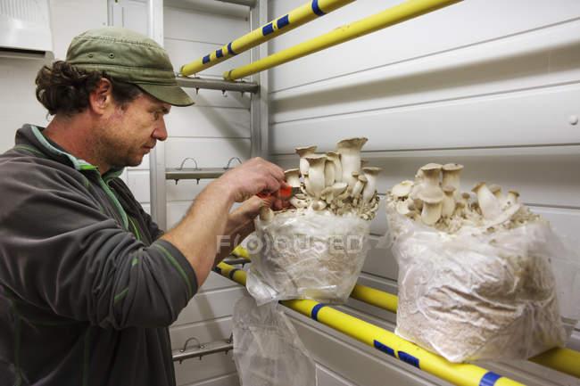 Людина мішки з білими грибами — стокове фото