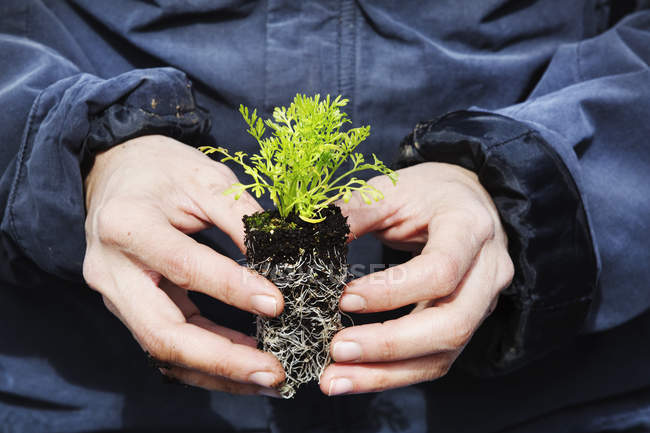 Gardener holding a small plug plant — Stock Photo