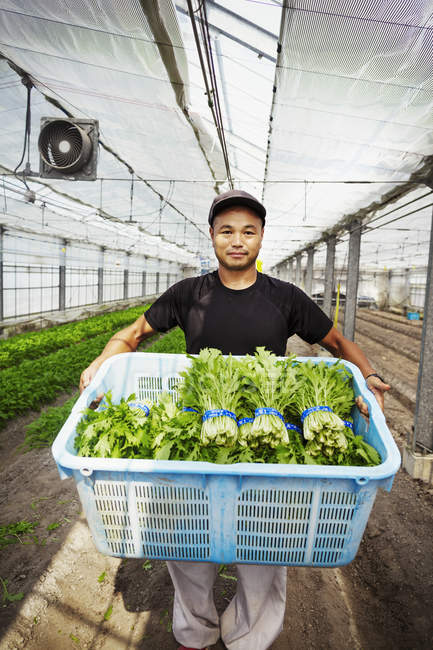 Worker in a greenhouse holding vegetables. — Stock Photo