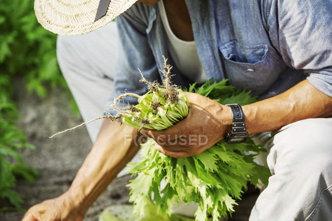 Man working in a greenhouse — Stock Photo