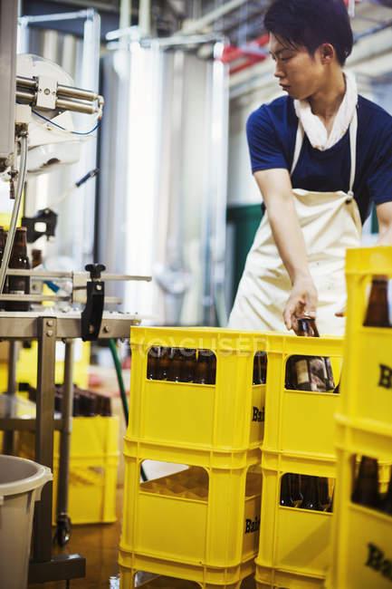 Arbeiter platziert Bierflaschen — Stockfoto