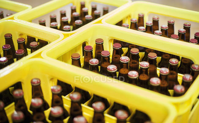 Yellow plastic crates with beer bottles — Stock Photo