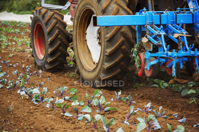 Tractor pulling a cultivator — Stock Photo