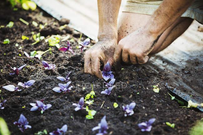 Man kneeling down planting seedlings. — Stock Photo