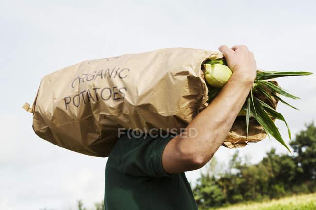 Mann mit geernteten Mais Maiskolben — Stockfoto